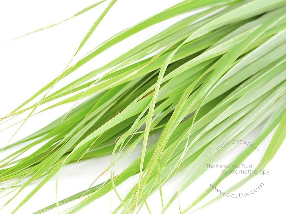 Citronella Ceylon Essential Oil 香茅精油