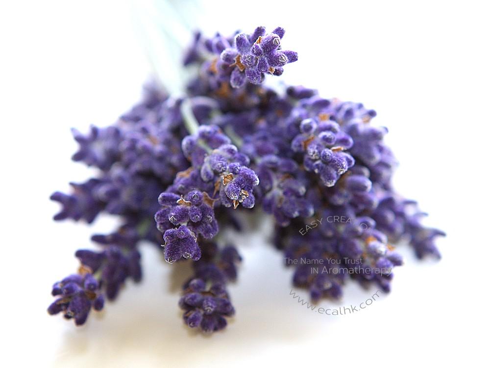 Lavender France Essential Oil 法國薰衣草精油