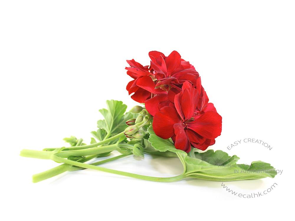 Geranium Floral Water 天竺葵花水