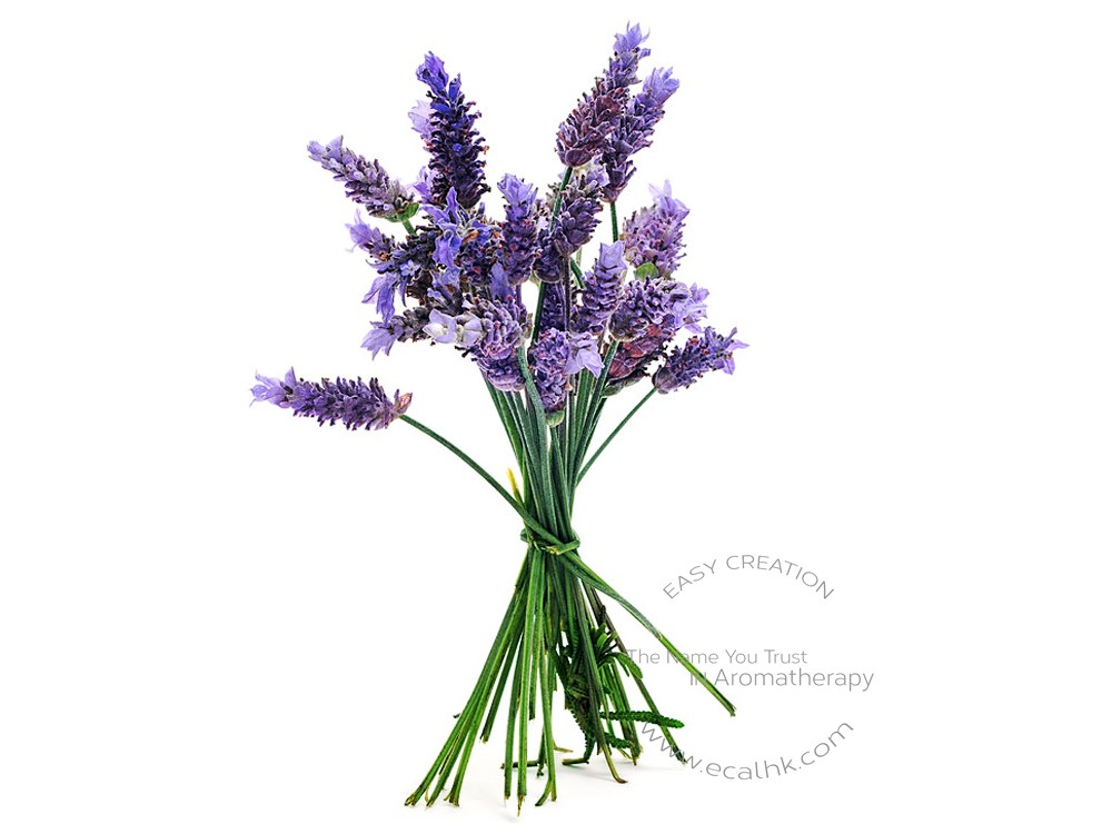 Lavender Organic Hydrosol 薰衣草有機純露